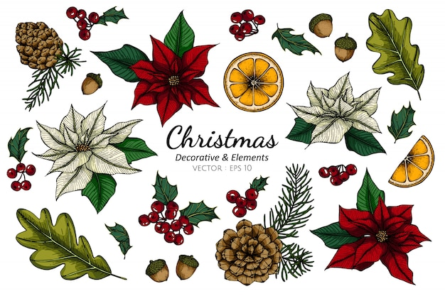 Collection set of christmas decorative flower and leaves