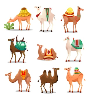 Collection set of cute cartoon camels. desert animals with bridles and saddles decorated with ethnic ornament.