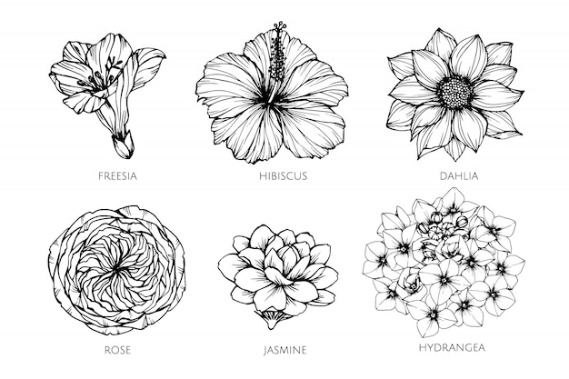 d1fe6be52 Freesia Vectors, Photos and PSD files | Free Download