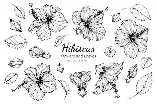 Collection set of hibiscus flower