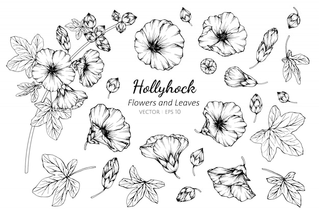 Collection set of hollyhock flower