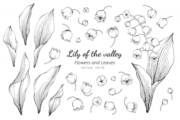 Collection set of lily of the valley flower a