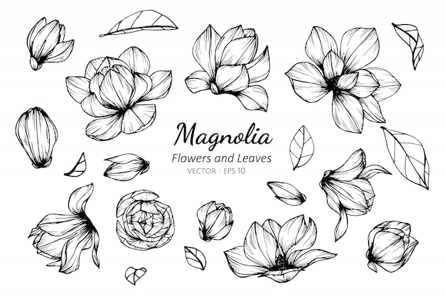 Collection set of magnolia flower