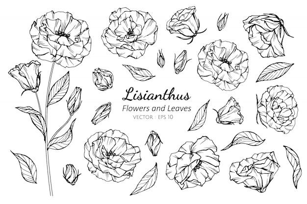 Lisianthus 꽃의 컬렉션 집합