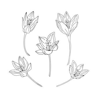 Набор сбора иллюстрации цветок шафрана. нежные штриховые рисунки весенних цветов.