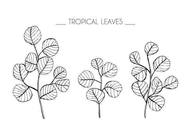 熱帯の葉の描画図のコレクションセット。