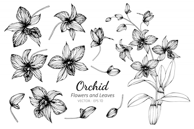 Collection set of orchid flower and leaves drawing illustration.