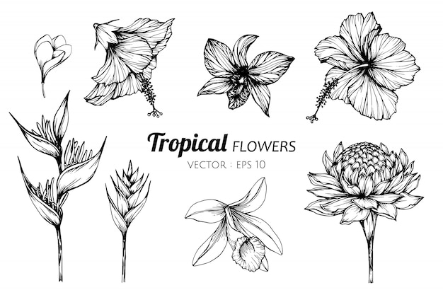 Collection set of tropical flower drawing illustration.