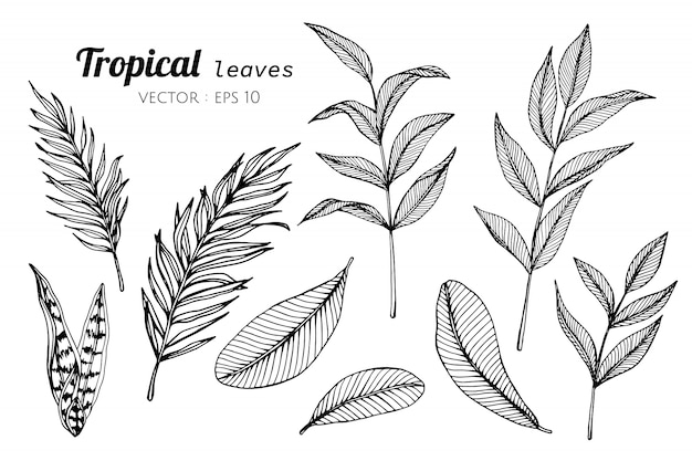 Collection set of tropical leaves drawing illustration.