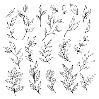 Collection of sketchy vintage branches with leaves. decorative elements for decoration