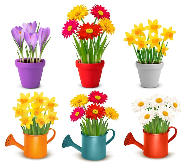 Collection of spring and summer colorful flowers in pots and watering can.