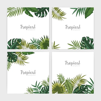 Collection of square background with green tropical leaves.