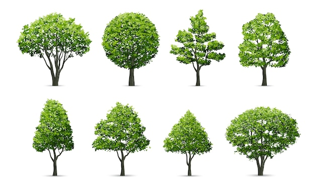 Collection of tree isolated on white background.