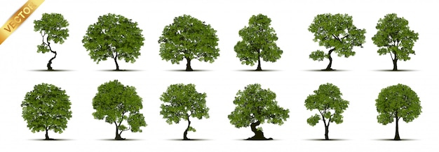 Collection of tree