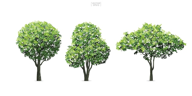 Collection of tree.