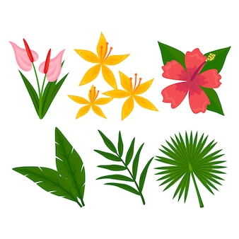 Collezione di fiori tropicali e design foglia
