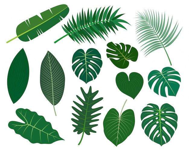 Collection of tropical leaves vector set