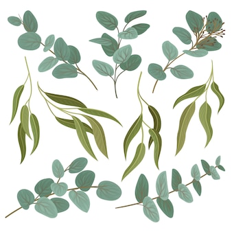 Collection of twigs with fresh green leaves, floral design elements  illustration on a white background