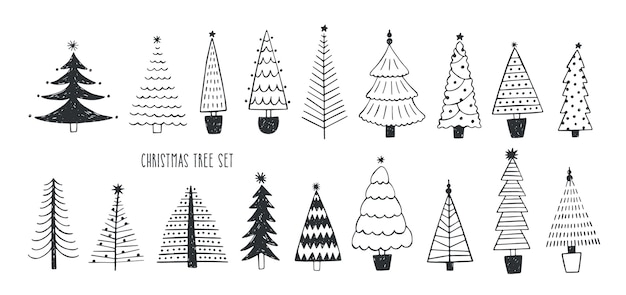 Collection of various firs, pines or spruces
