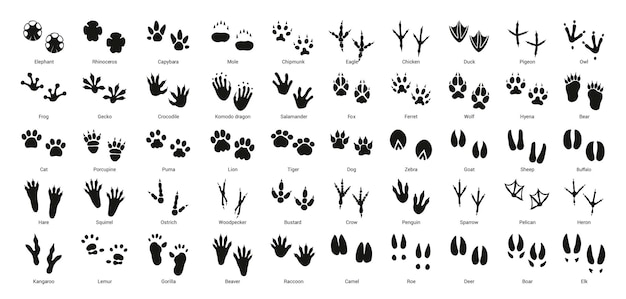 Collection of vector footprints of birds and animals.