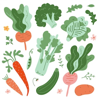 Collection of vegetable illustrations
