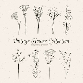 Collection of vintage hand drawn flowers Free Vector
