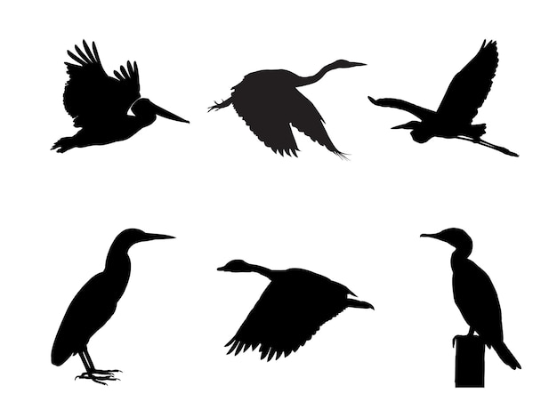 Collection of water bird bird on tree branch silhouettes.