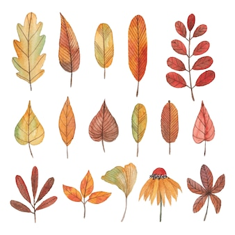Collection of watercolor autumn leaves, flowers and branches