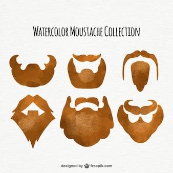 Raccolta delle barbe acquerello
