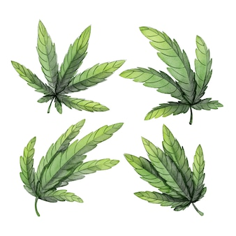 Collection of watercolor botanical cannabis leaves