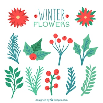 Collection of watercolor christmas plants