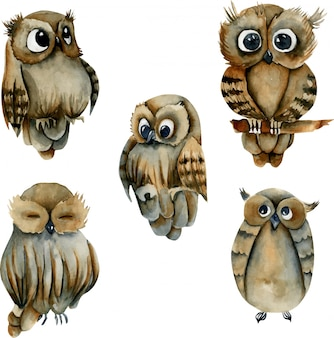 Collection of watercolor cute owls