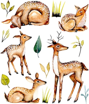 Collection of watercolor deers and baby deers