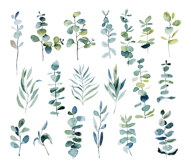 Collection of watercolor eucalyptus branches, botanical elements isolated on white
