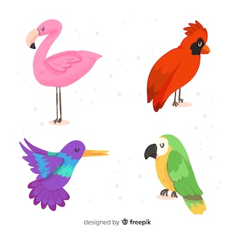 Collection of watercolor exotic bird