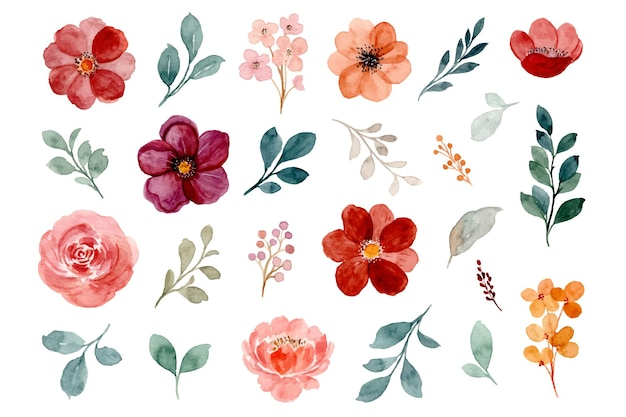 Collection of watercolor floral elements. burgundy and rose