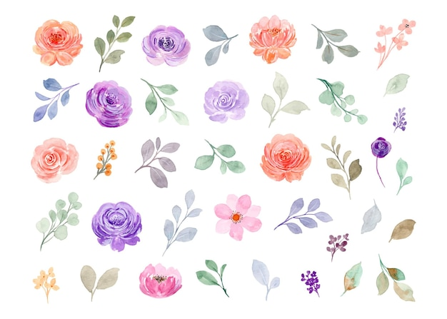 Collection of watercolor floral elements. pink and purple rose