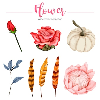 Collection of watercolor illustration beautiful flower