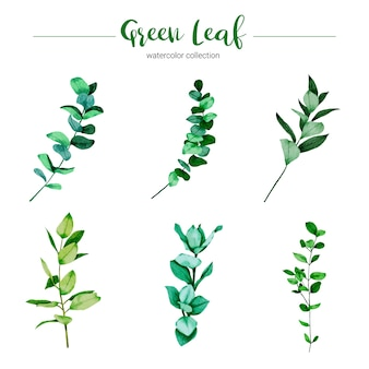 Collection of watercolor illustration green leaf