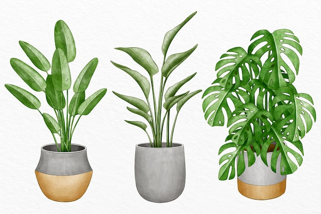 Collection of watercolor plants in pots