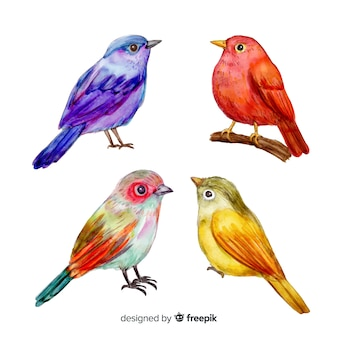 Collection of watercolor tropical birds