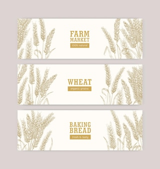 Collection of web banner templates with wheat ears or spikelets on white background. cultivated plant, cereal grain or food crop. monochrome realistic vector illustration for natural products promo.