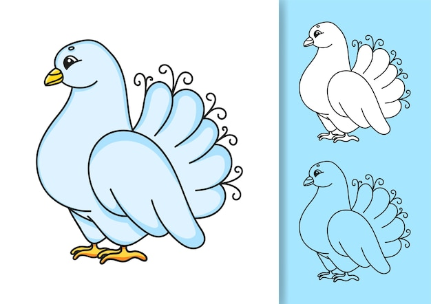 Collection of wedding white pigeon