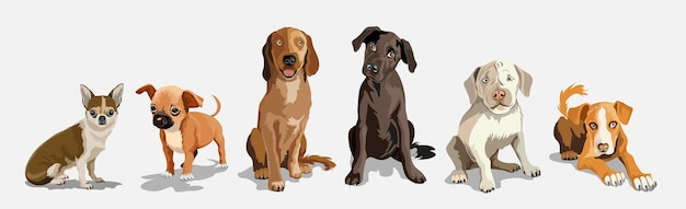 Collection with cute dogs of different breeds