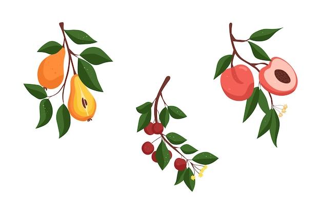 果物のコレクション梨の枝さくらんぼの枝桃の枝
