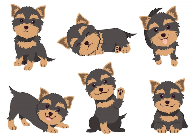 The collection of yorkshire terrier in many action.