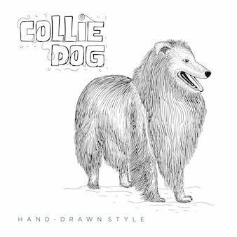 コリー犬。手描き動物イラスト