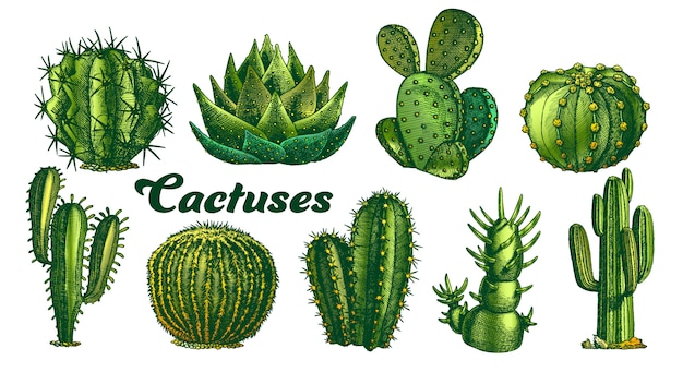 Color desert plants cactus illustration.