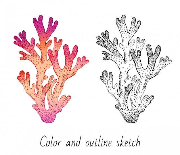 Color and outline sketch coral reef set