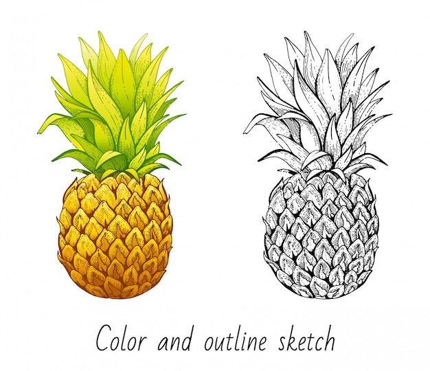 Color and outline sketch pineapple set